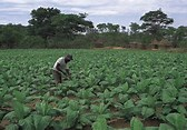 Zimbabwe Farm- Before